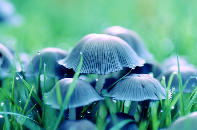 Mushroom Management Theory in Human Resources